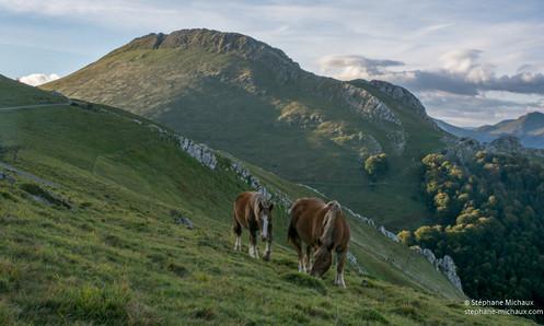 Le Behorleguy et les chevaux