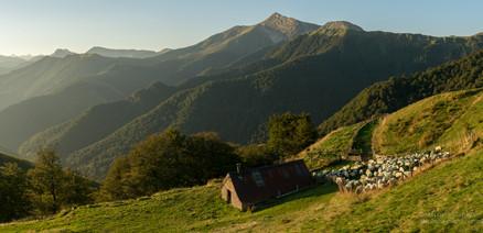 Panorama brebis au lever de soleil  à Iraty
