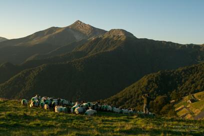 Le berger, les brebis manex tête noire et le pic d'Orhy au lever de soleil