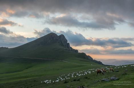 Brebis, chevaux et pic d'Irau au coucher de soleil