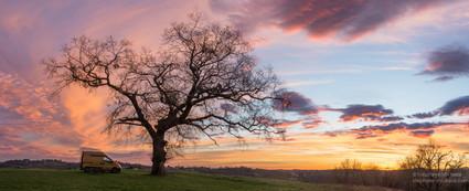 Panorama d'un chêne au lever de soleil