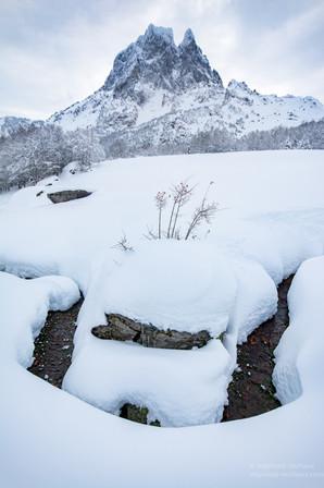 Ruisseau et arbuste l'hiver avec le pic d'Ossau