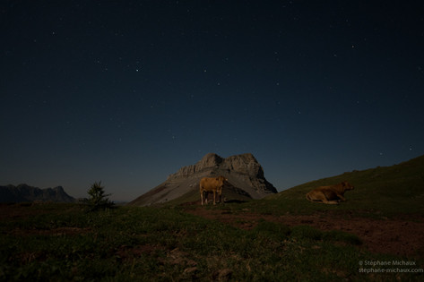 Ciel étoilé, vaches, Castillo de Acher au clair de lune