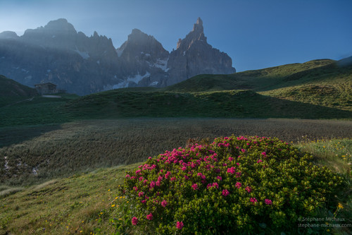 Cimon della Pala, rhododendrons, et le refuge Baita G. Segantini