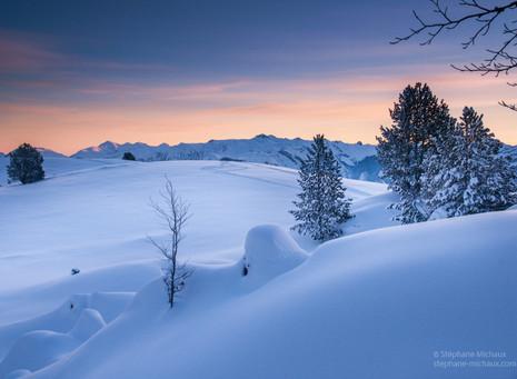 Aurore d'hiver, paysage de pins et plateau de neige