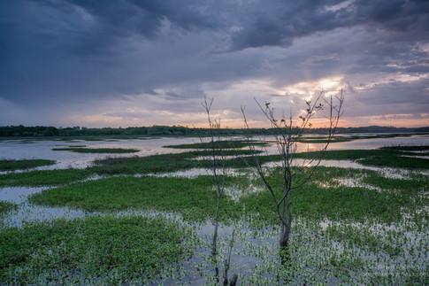 Arbustes et aube sombre au marais d'Orx