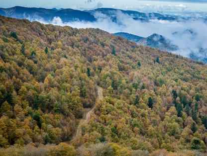 Forêt d'Iraty aux couleurs d'automne