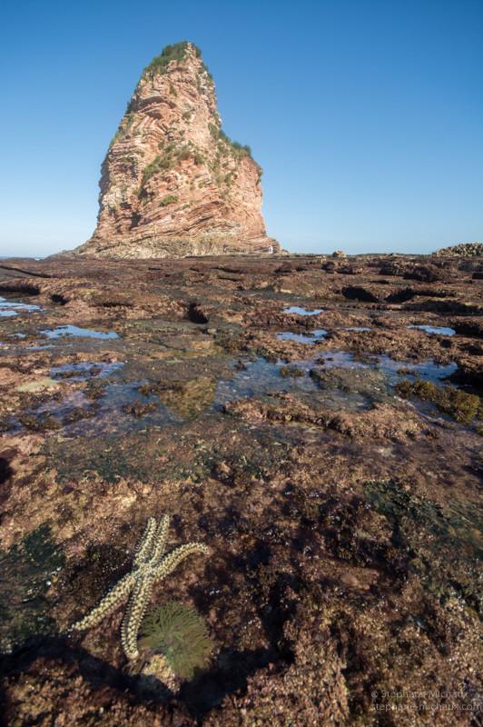 L'étoile de mer, l'anémone et le rocher des 2 jumeaux à Hendaye