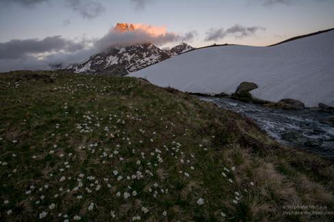 Renoncules et pic d'Ossau au coucher de soleil