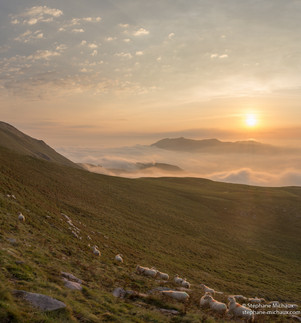 brebis, mer de nuages au lever de soleil à l'Artzamendi