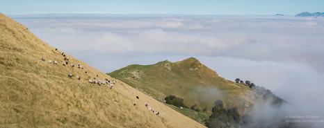 Panorama brebis et mer de nuages à Iraty