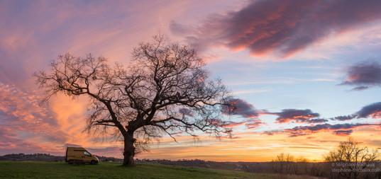 Le chêne au lever de soleil sur une colline de Villefranque
