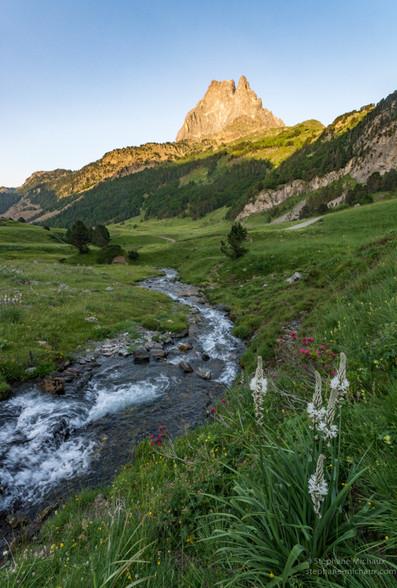 Asphodèles, rivière et pic d'Ossau au coucher de soleil printanier