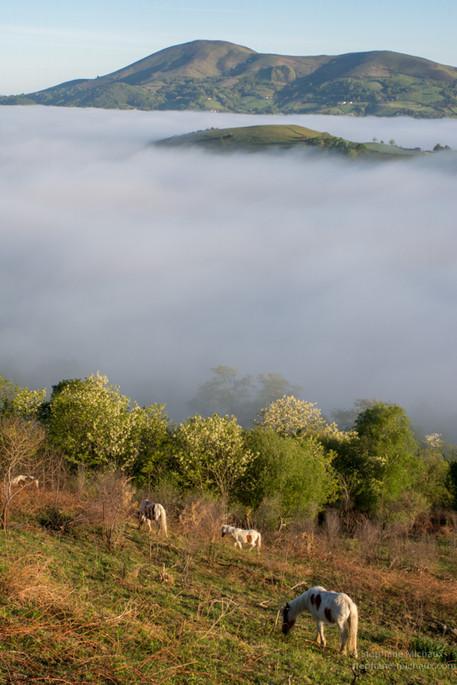 Pottoks, mer de nuages sur l'Ursuya