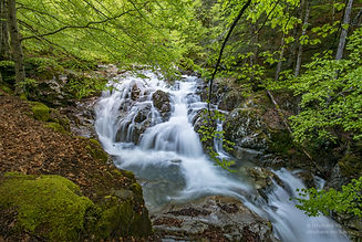 Pyrénées_vallée_d_Ossau_gave_de_Bious