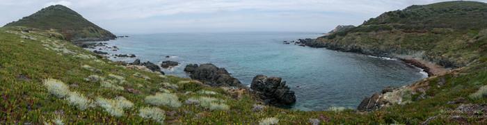 Panorama à Cala di reta avec les fleurs immortelles