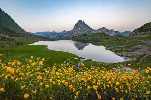 Fleurs jaunes, lac d'Ayous et pic d'Ossau au crépuscule