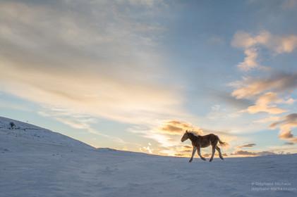 Poney à l'aube dans la neige