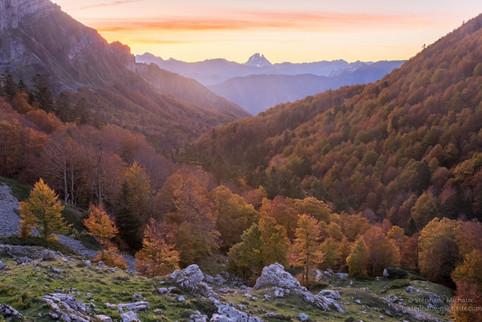Aube sur le bois du braca d'Azuns à l'automne, pic d'Ossau