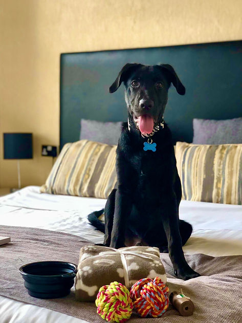 Pet Friendly Hotel in Bournemouth, Dog Friendly Hotel in Bournemouth
