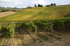 vigneti Toscana