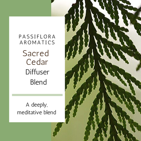 Sacred Cedar