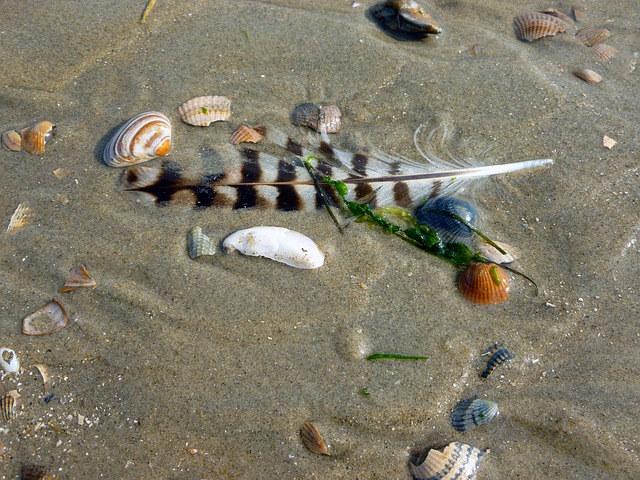 seagull-feather-2768917_640.jpg