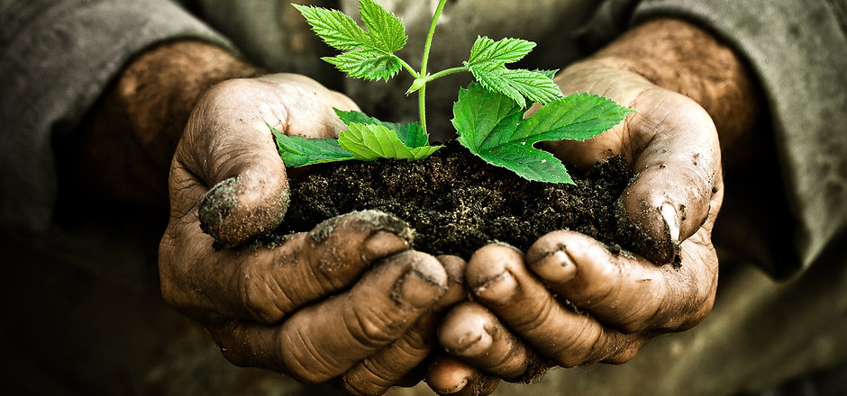 """Greek Proverb Quote""""A society grows great when old men plant trees whose shade they know they shall"""