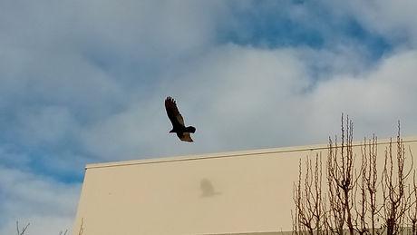 vulture 2021.jpg