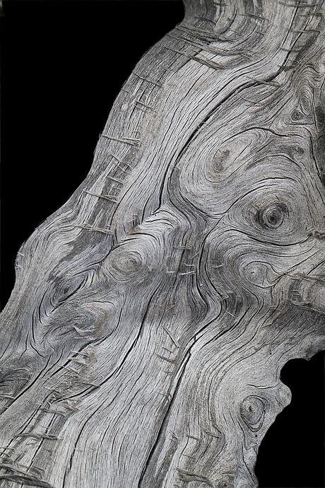 Hagit_Detail_cutoutC_8x5_300.jpg