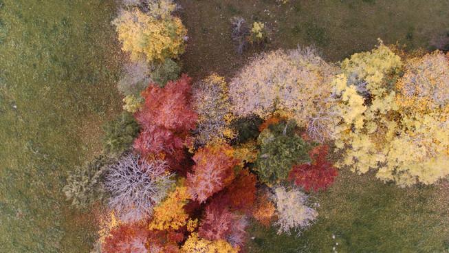 Jura, Herbstfarben, DROHNE, Drohnenaufnahmen, Flugaufnahmen, Bern, Biel