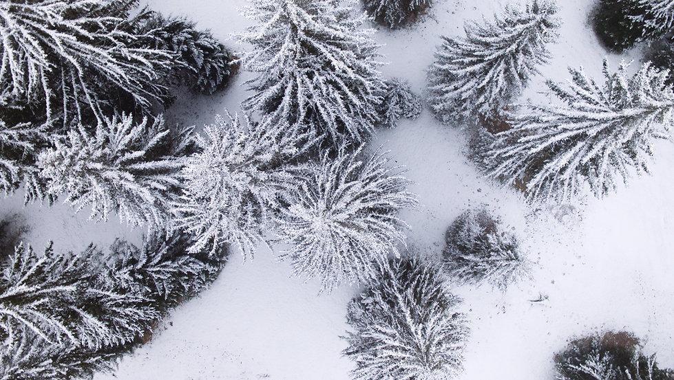 bäume3.jpg