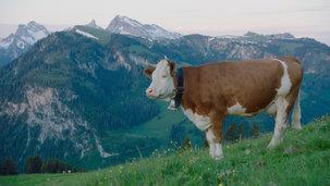 17_Simmental_Switzerland_Filmstill_tonun