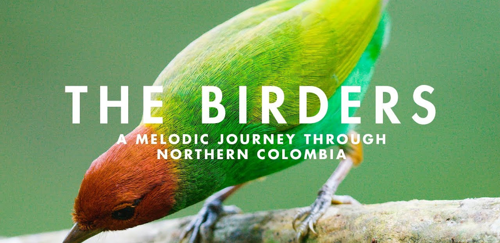 A documentary on birdwatching in northern Colombia