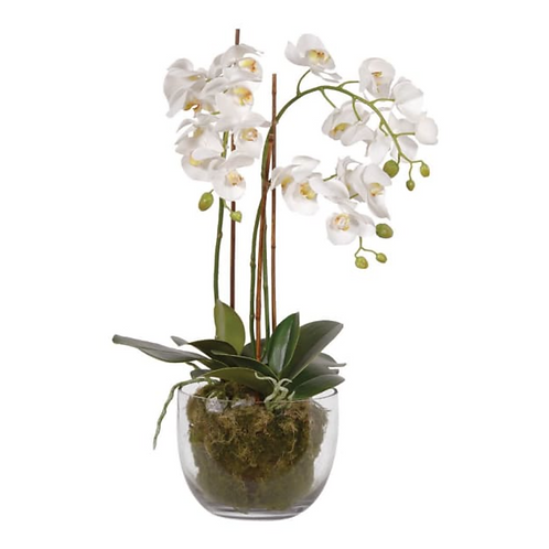 REALISTIC WHITE ORCHIDS WITH MOSS IN GLASS BOWL