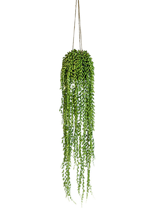 DECORATIVE HANGING PLANT - STRING OF PEARLS ARRANGEMENT