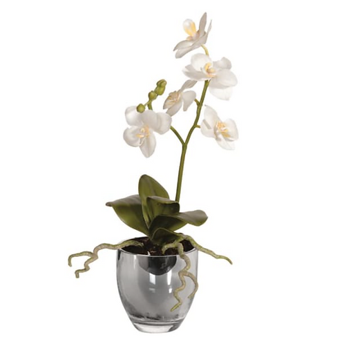 BABY WHITE ORCHID IN METALLIC GLASS POT