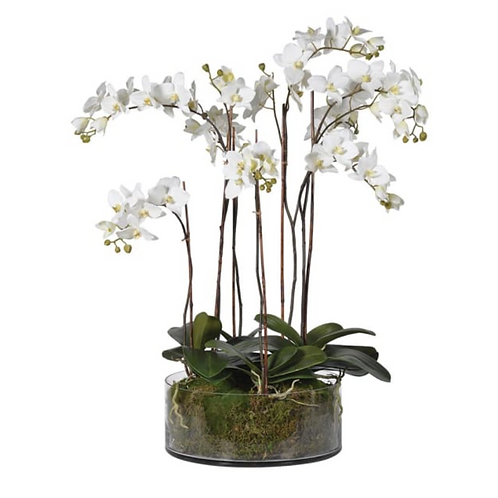 EXTRA LARGE REALISTIC ORCHID IN GLASS BOWL WITH MOSS