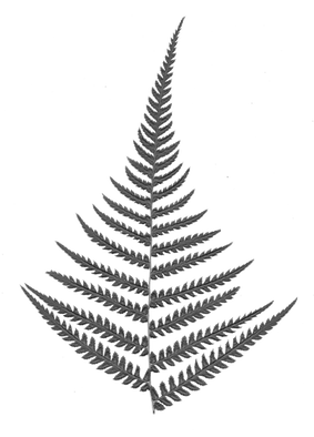 Fern2 copy.png