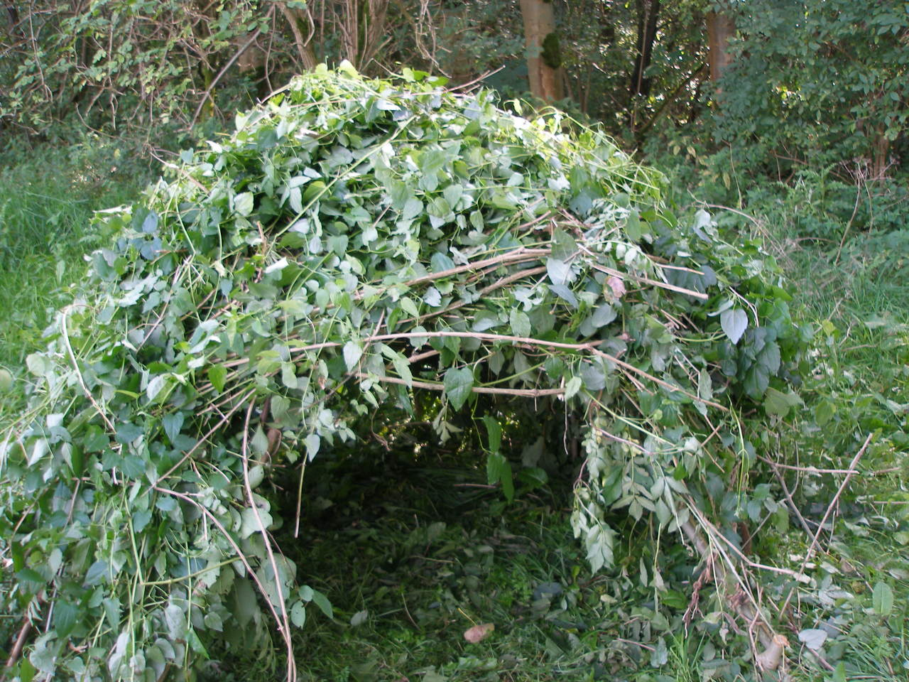 Bushcraft shelter