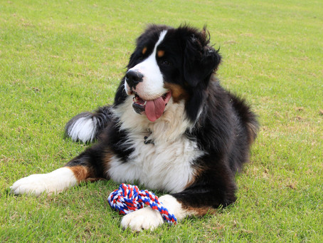 A Guide to Dog Toys
