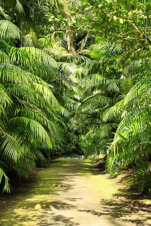 Esconderijo de Tarzan