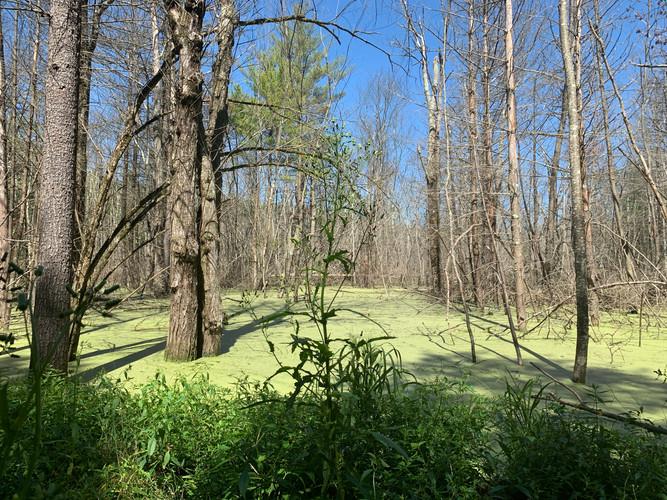 Explore a Swamp