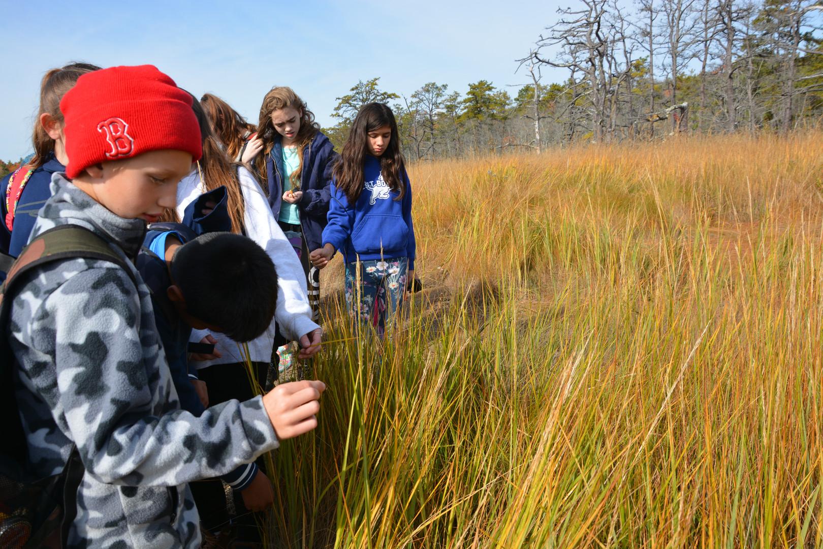 Explore Salt Marshes