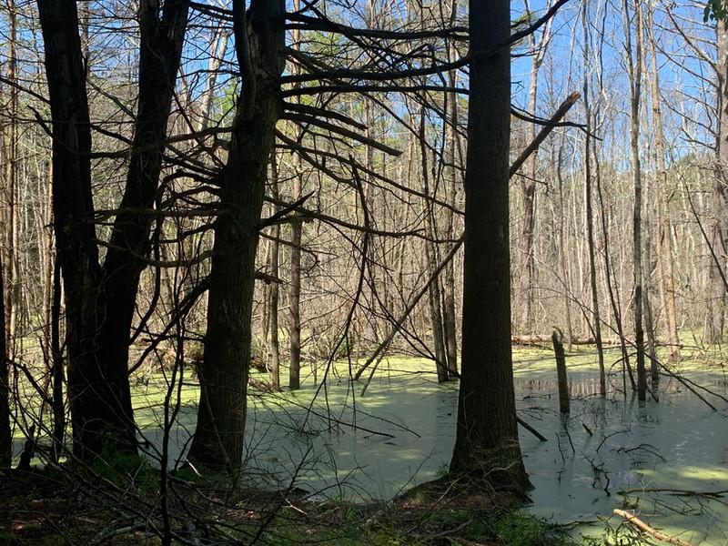 Investigate a Swamp