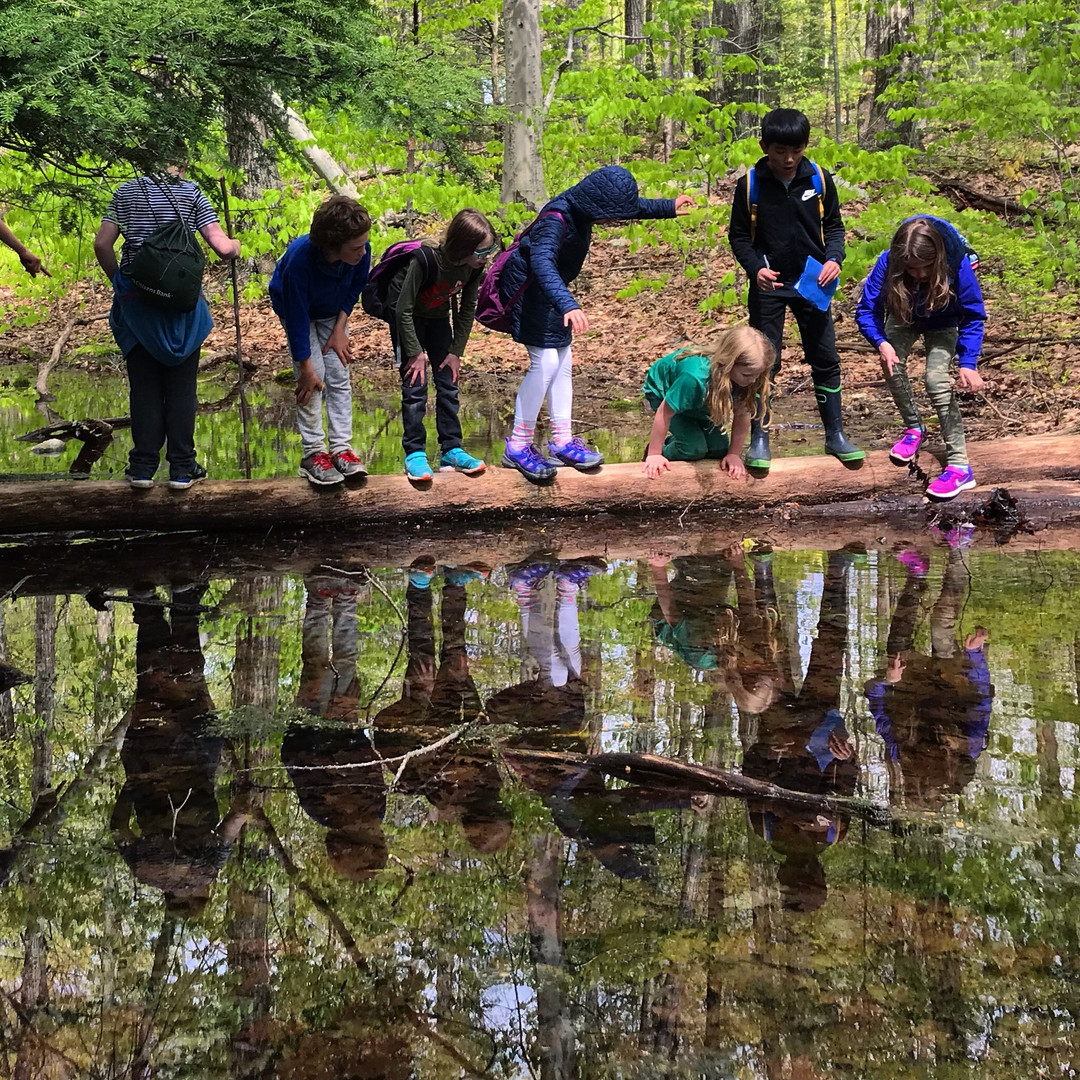 Old Growth Forests and Vernal Pools
