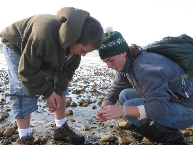 Explore Marine Life at Hammonasset Beach