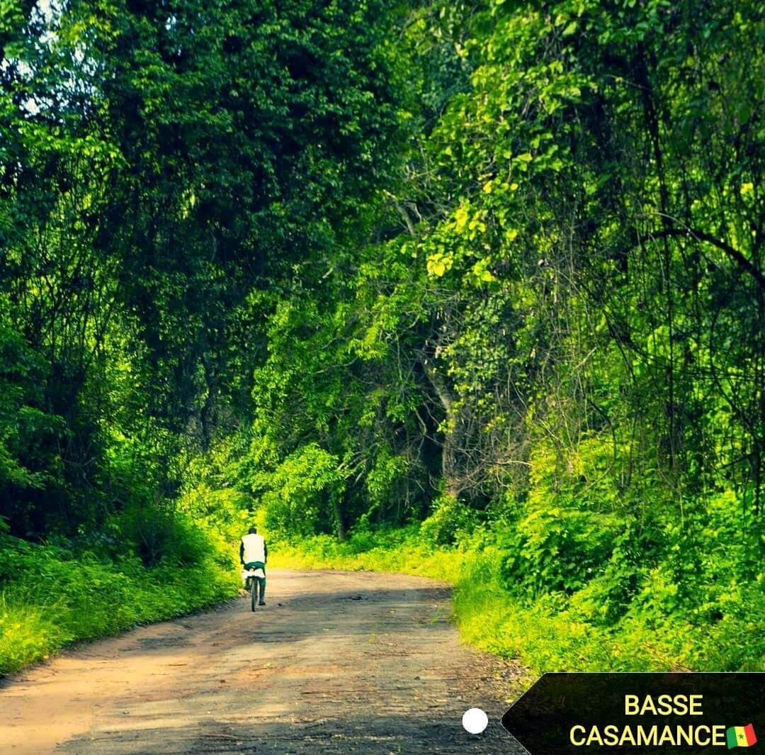 Les forêts de la Casamance