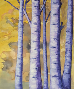 Stand of birches