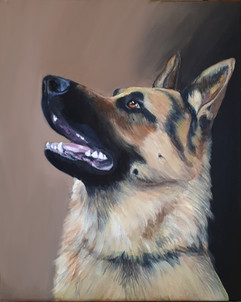 Booker_German Shepherd